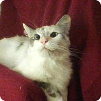 Adopt A Pet :: Camilla - Delmont, PA
