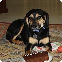 Adopt A Pet :: Lucy - Homewood, AL
