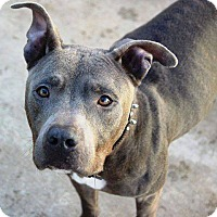 Adopt A Pet :: Cole - Surprise, AZ