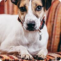 Adopt A Pet :: Orion - Portland, OR