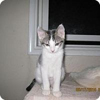 Adopt A Pet :: Kevin - La Jolla, CA