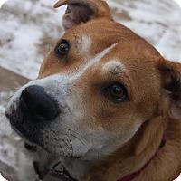 Adopt A Pet :: Annie - Bristol, CT