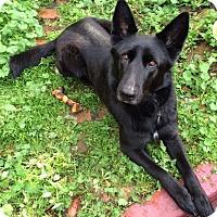 Adopt A Pet :: Bismarck - San Francisco, CA