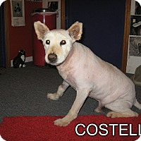 Adopt A Pet :: COSTELLO - Port Clinton, OH