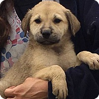 Adopt A Pet :: Kosmo (7 lb) Video! - SUSSEX, NJ