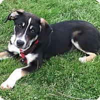 Adopt A Pet :: Olivia - Cedartown, GA