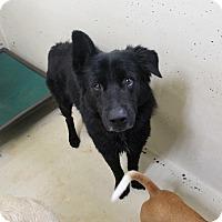 Adopt A Pet :: A05 Benji - Odessa, TX