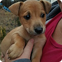 Adopt A Pet :: Burton - Allen town, PA