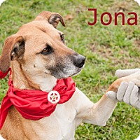 Adopt A Pet :: Jonah - Hamilton, MT