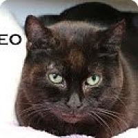 Adopt A Pet :: Cleo>^.,.^< $35 adoption - Union Lake, MI