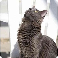 Adopt A Pet :: Hillary - Bonita Springs, FL