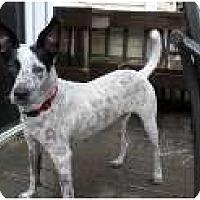 Adopt A Pet :: Delilah - Nokomis, FL