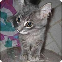 Adopt A Pet :: Quincy - Davis, CA