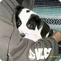 Adopt A Pet :: Elijah - Dundas, VA