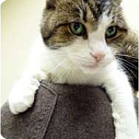 Adopt A Pet :: Giselle - Chicago, IL