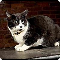 Adopt A Pet :: Guttercat - Owensboro, KY