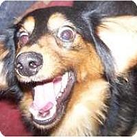 Adopt A Pet :: Franz - Antioch, IL