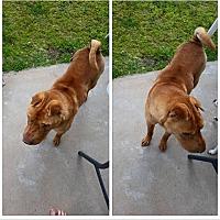 Adopt A Pet :: Mo - Orange Cove, CA