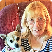 Adopt A Pet :: Cece - Plain City, OH