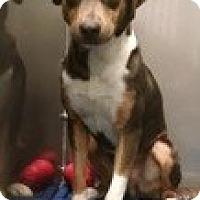Adopt A Pet :: Sammy - Edisto Island, SC