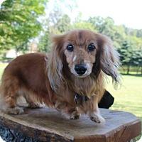Adopt A Pet :: Lexie - Marcellus, MI