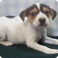 Adopt A Pet :: Emmy - Avon, NY