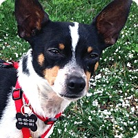 Adopt A Pet :: Jimmy Mack - San Francisco, CA
