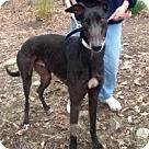 Adopt A Pet :: Jax Drover
