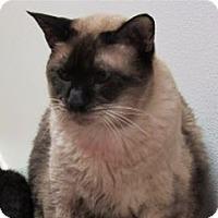 Adopt A Pet :: Jackson - Cary, NC