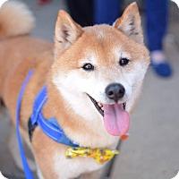 Adopt A Pet :: Matoshi - Manassas, VA