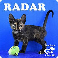 Adopt A Pet :: Radar - Carencro, LA