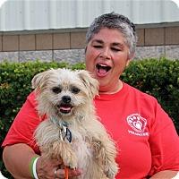 Adopt A Pet :: Mr. Browning - Elyria, OH
