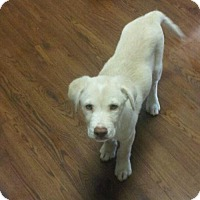 Adopt A Pet :: Riesel - Broomfield, CO