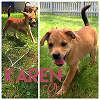 Adopt A Pet :: Karen O - Jersey City, NJ