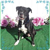 Adopt A Pet :: JACQUES - Marietta, GA