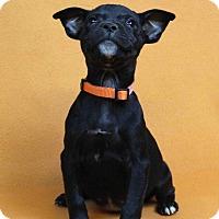 Adopt A Pet :: IDA - Westminster, CO