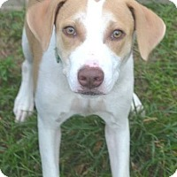 Adopt A Pet :: Gypsy - Beaumont, TX