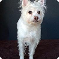 Adopt A Pet :: Kix - Van Nuys, CA