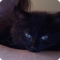 Adopt A Pet :: Hattie - Covington, KY