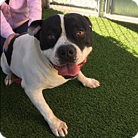 Adopt A Pet :: Kennel 36 - Corona, CA