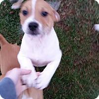 Adopt A Pet :: Parker - Chippewa Falls, WI