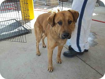 Golden Retriever Mix Dog for adoption in Newnan City, Georgia - Teddy