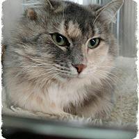 Adopt A Pet :: Samantha - Pueblo West, CO