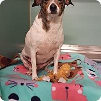 Adopt A Pet :: Senna - Pensacola, FL