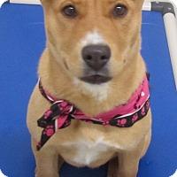 Adopt A Pet :: Carmel - Holton, KS
