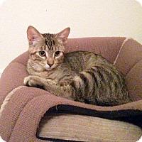 Adopt A Pet :: Cookie - Arlington/Ft Worth, TX