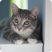 Adopt A Pet :: Beni - Richmond, VA