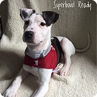 Adopt A Pet :: Jake aka Chunk - Colonial Heights, VA