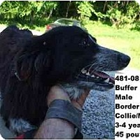 Adopt A Pet :: I.D. # 481-08 - ADOPTED! - Zanesville, OH