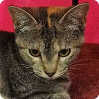 Adopt A Pet :: Twilight - Escondido, CA
